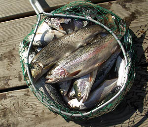 Source: http://wdfw wa gov/fishing/fish-local/ - beachdog com